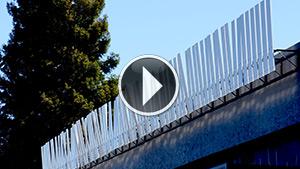 Erratic-Fence-Video